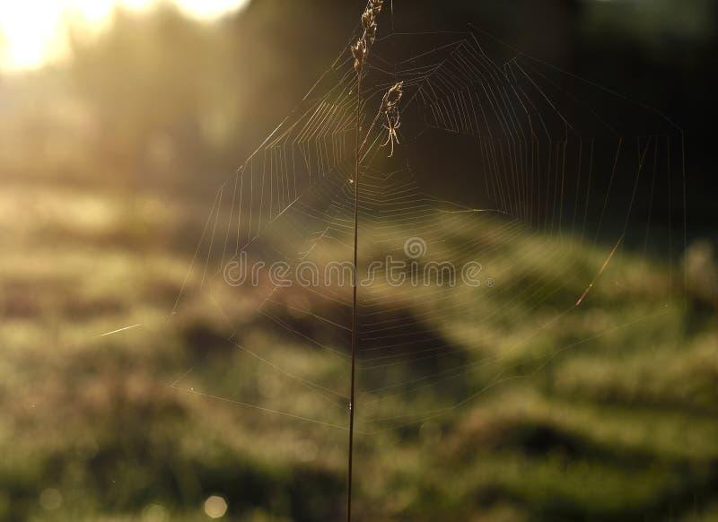 La rete ragnatela alla luce del giorno fotografie stock libere da diritti