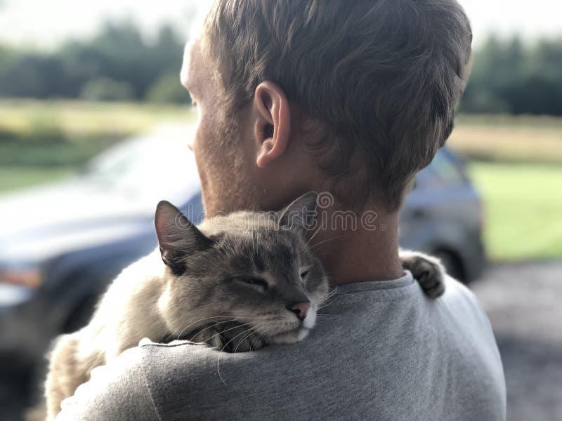 La reunión feliz del gato de ojos azules gris con el dueño después de dividir, el gato agradecido abraza el rubio y las sonrisas fotos de archivo