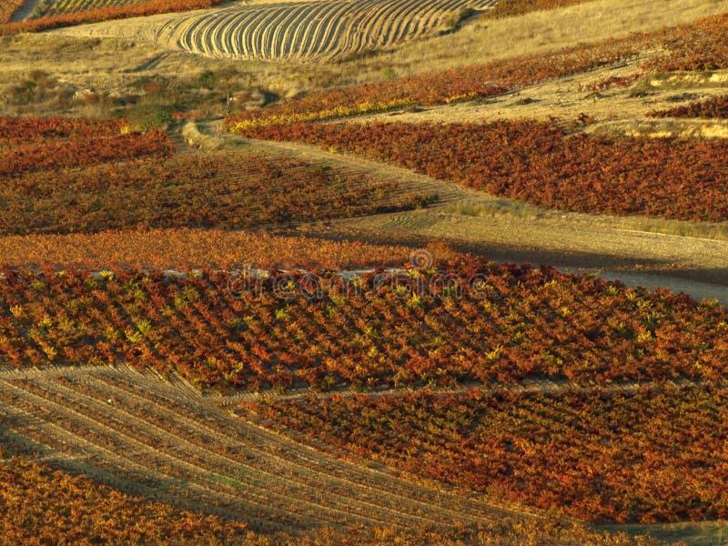La rioja im Herbst stockbild