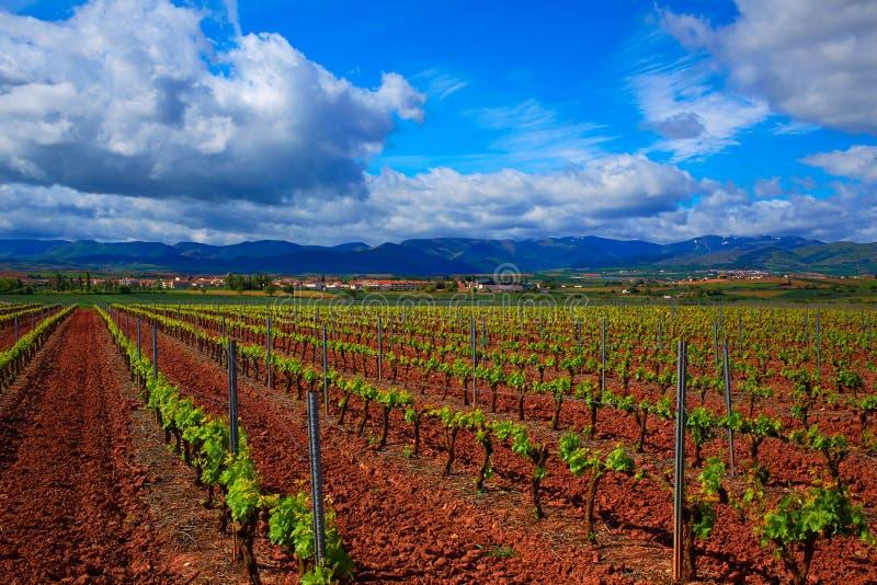 La Rioja vingårdfält i vägen av St James arkivfoto