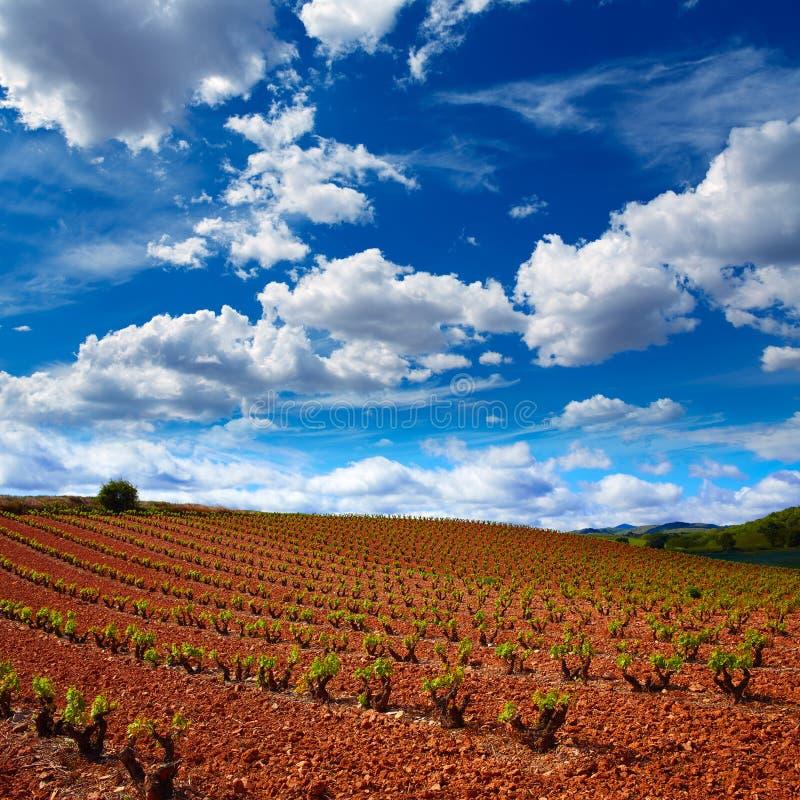 La Rioja vingårdfält i vägen av St James royaltyfri bild