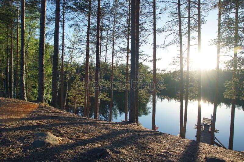 La riva di un lago con i pini alti, sera della foresta di estate fotografia stock libera da diritti