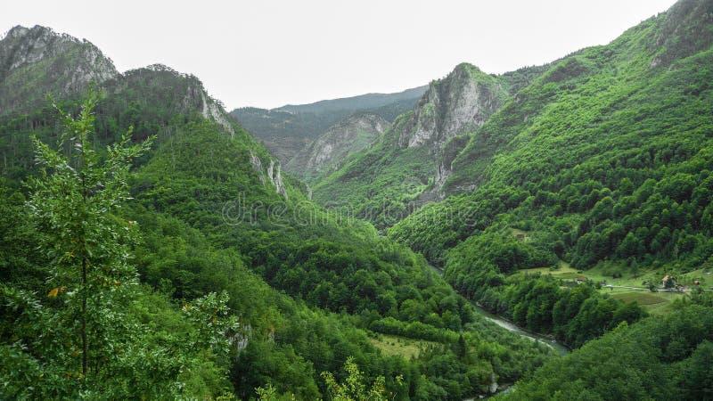 La rivière coule entre les montagnes couvertes de vert montenegro image stock