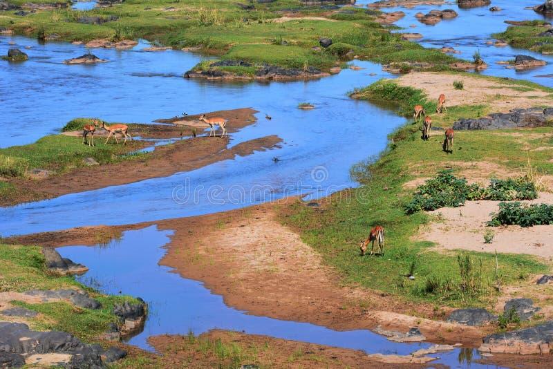La rivière d'Olifants images libres de droits