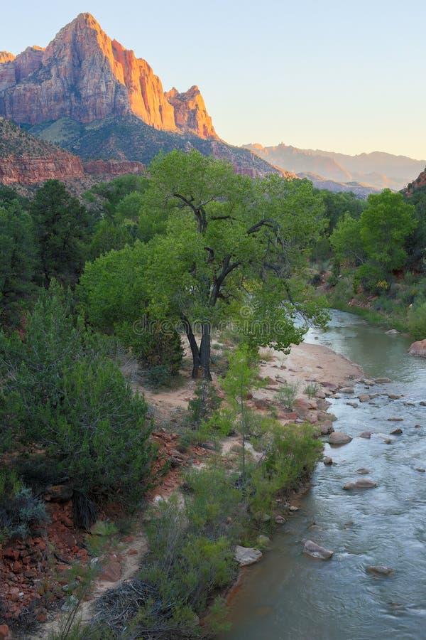 Download La Rivière De Gardien Et De Vierge Du Pont De Jonction De Canyon, Zion National Park, Utah, Etats-Unis Photo stock - Image du beauté, nature: 77163256