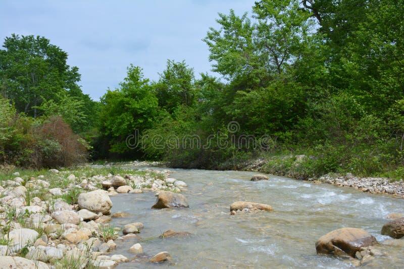 La rivière en montagnes, paysage, forêt image libre de droits