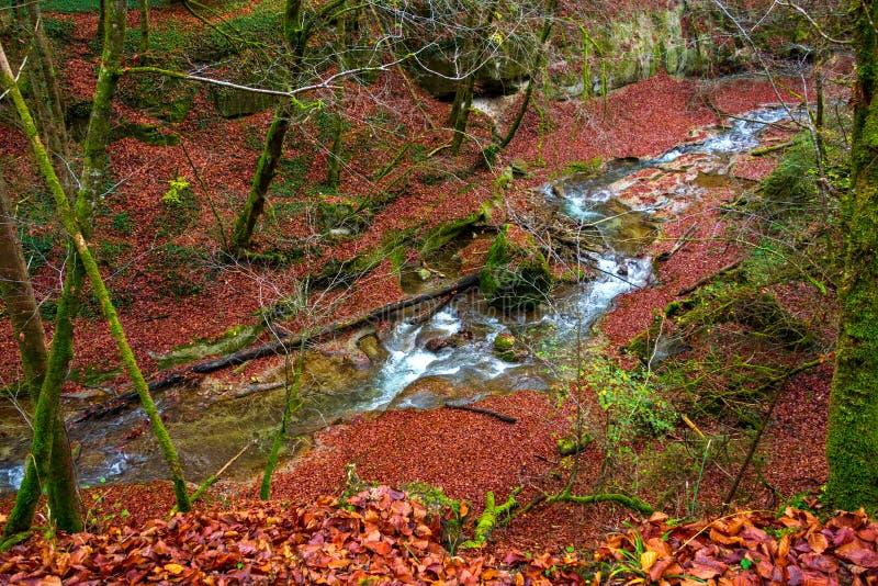 La rivière entre dans une belle forêt d'automne photos libres de droits