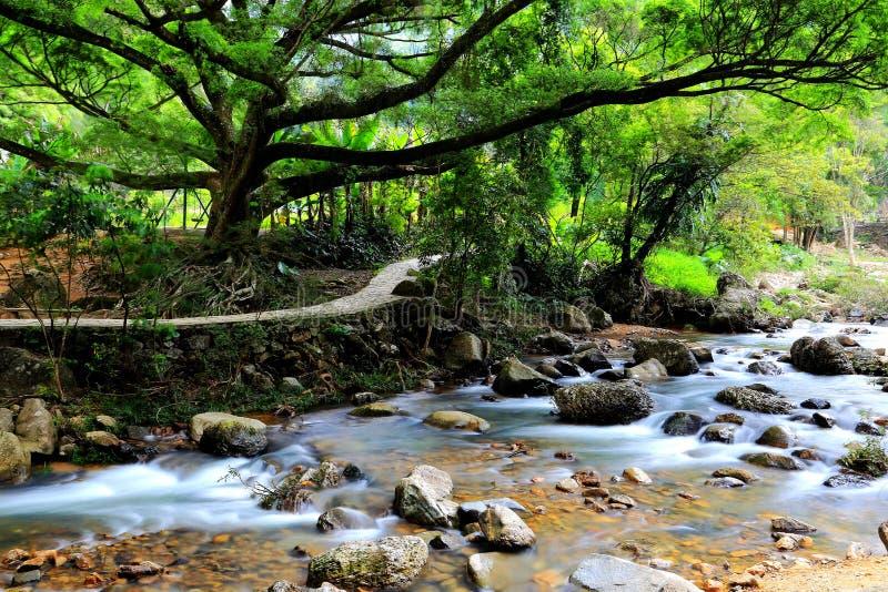 La rivière et la forêt image stock