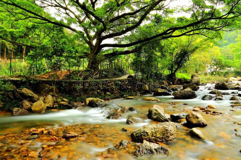 La rivière et la forêt photos libres de droits
