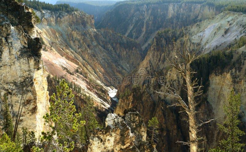 La rivière Yellowstone traverse le canyon grand de yellowstone photos libres de droits