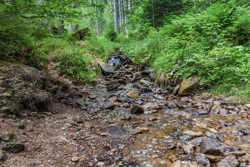 La roca del arroyo del bosque empiedra árboles fotos de archivo libres de regalías