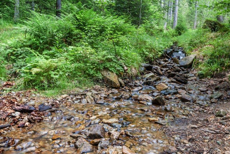 La roca del arroyo del bosque empiedra árboles fotografía de archivo libre de regalías