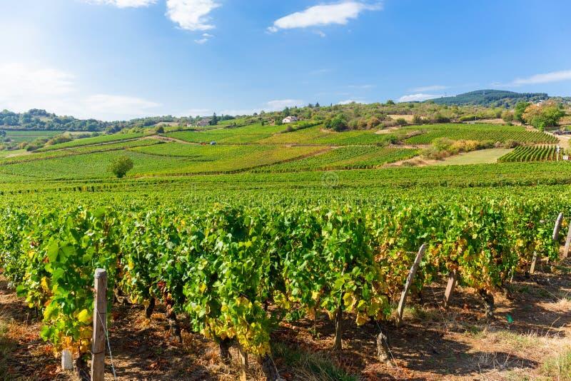 La Roche de Solutré avec des vignobles, Bourgogne, France images libres de droits