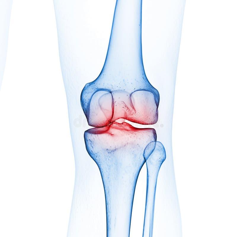 La rodilla esquelética ilustración del vector