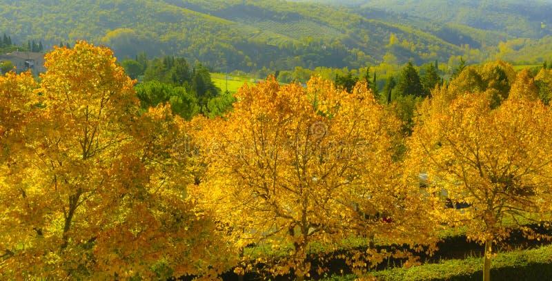 La Rolling Hills verde del país vinícola italiano con los árboles amarillos del otoño foto de archivo