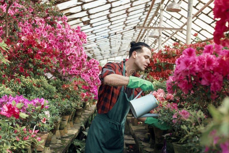 La ropa de trabajo joven del triunfo del jardinero del individuo con los esprayes de moda del corte de pelo riega en las flores c fotos de archivo
