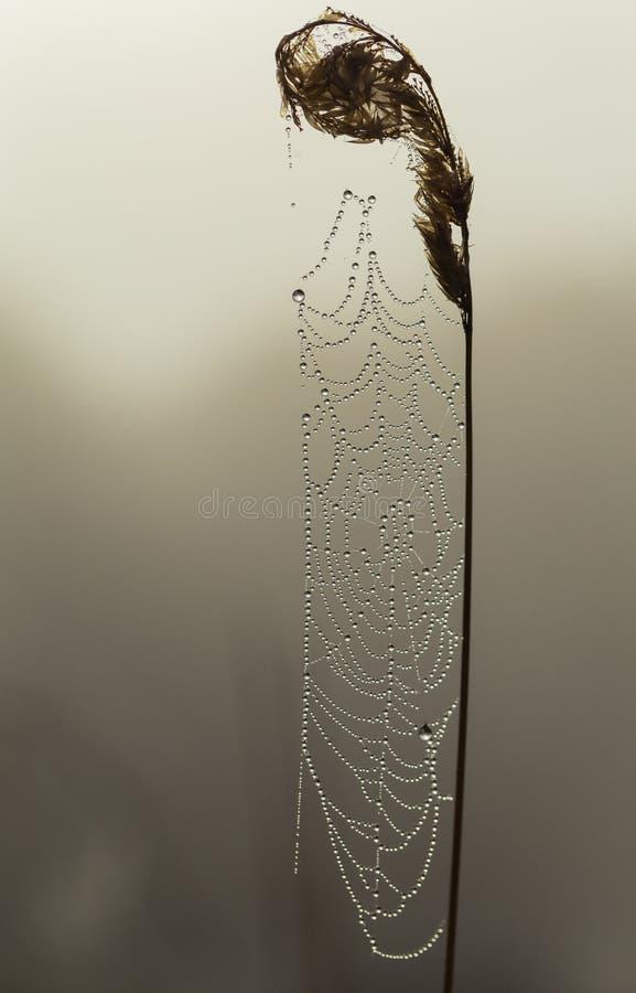 La rosée a couvert la toile d'araignée dans le début de la matinée photo stock
