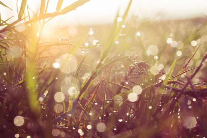 La rosée et l'eau se laisse tomber sur l'herbe verte avec le rayon du soleil derrière image libre de droits