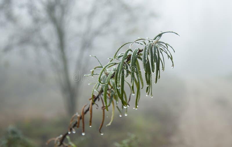 La rosée sur la branche avec des feuilles dans une forêt d'automne goutte d'eau sur le fond de bokeh images libres de droits