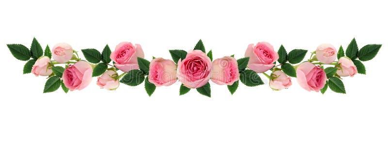 La rosa del rosa florece y florece la línea arreglo foto de archivo libre de regalías