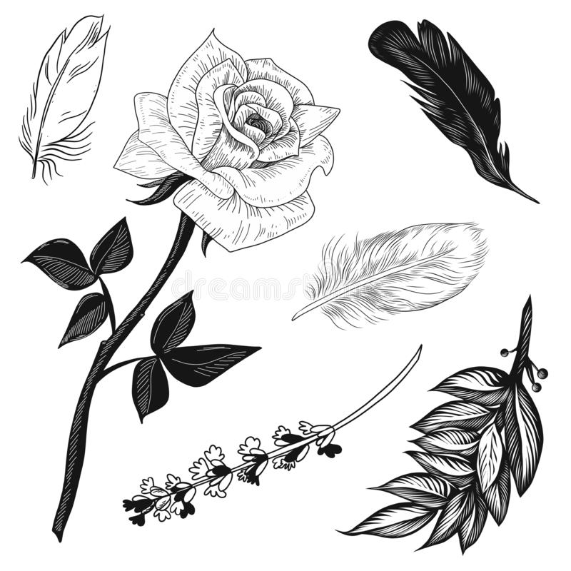 La rosa di illustratione di vettore, la lavanda, le piume e le foglie della baia hanno messo in bianco e nero isolato su fondo bi illustrazione vettoriale