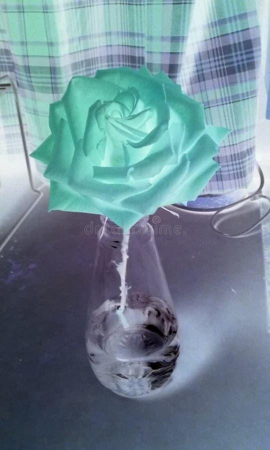 La Rose fotos de archivo
