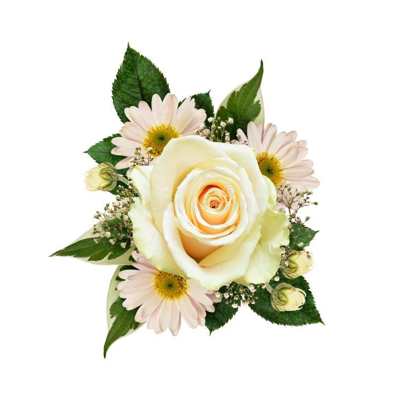 La rose de jaune fleurit la composition d'isolement sur le blanc photos libres de droits