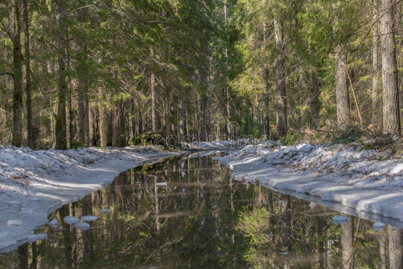 La route à la forêt impeccable le long des bords de la route, la neige fond et forme un grand magma dans lequel la forêt est refl images libres de droits