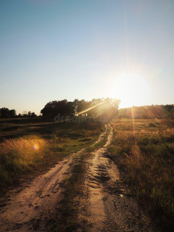 La route étroite dans le champ menant aux bois images stock