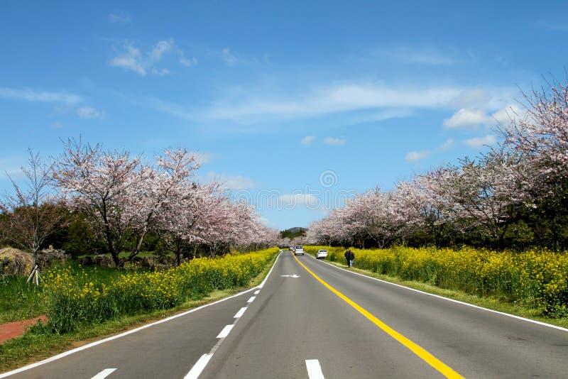 La route avec la fleur de fleur photo stock