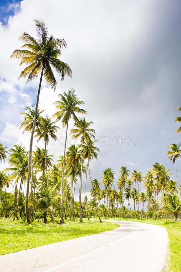 la route, Cocos aboient, le Trinidad images stock