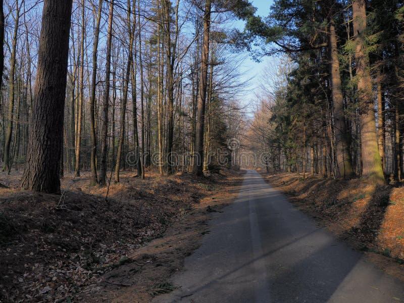 La route colorée dans la forêt avec les arbres colorés en montagnes de Beskid aménagent en parc chez Wapienica près de la ville d image stock