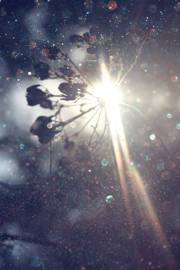 La route dans l'éclat de forêt et de lumière a traité l'image comme imagination ou concept magique photos stock