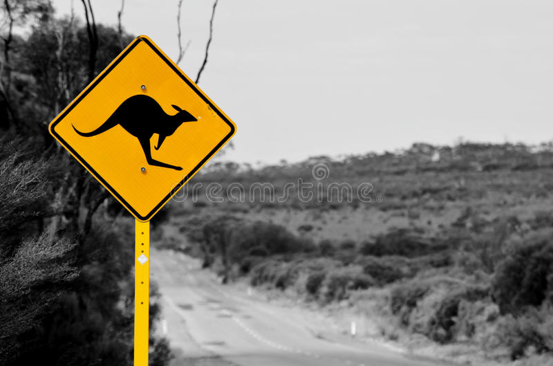 La route de kangourou photo libre de droits
