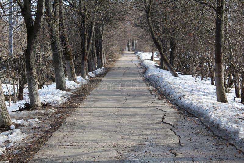 La route en parc en premier ressort photographie stock libre de droits