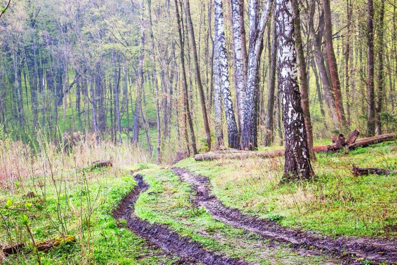 La route est au printemps forêt avec les voies profondes pendant le rains_ photos stock