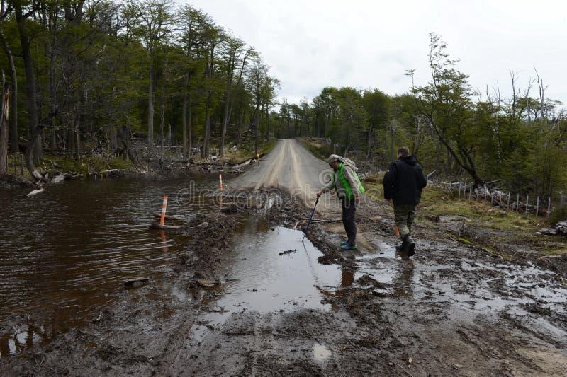 La route a inondé en raison des actions des castors qui ont construit le barrage photo libre de droits