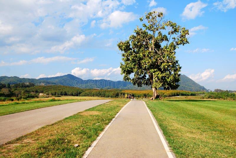 La route isolée d'arbre et de bicyclette dans le Singha se gare photos stock