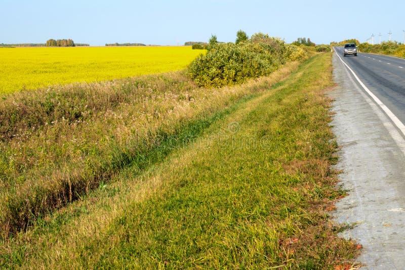 La route le long du champ avec les fleurs jaunes, de l'horizon du champ et de la route est jointe en longueur photo stock