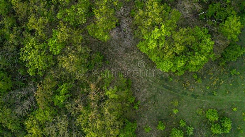 La route menant à la photo de forêt avec un bourdon de quadcopter images libres de droits