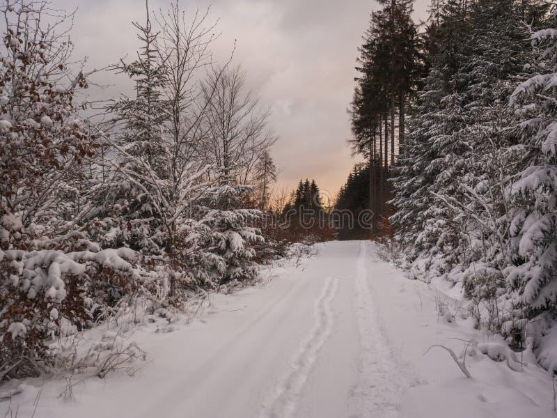 La route ou le sentier piéton dans la neige a couvert le paysage de forêt de sapin neigeux et d'arbres impeccables, branches, pay photos stock