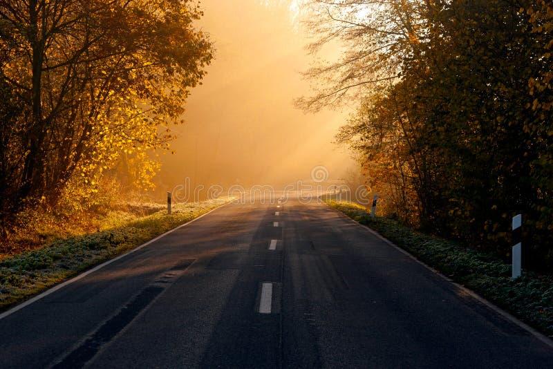 La route passant par la forêt photo stock