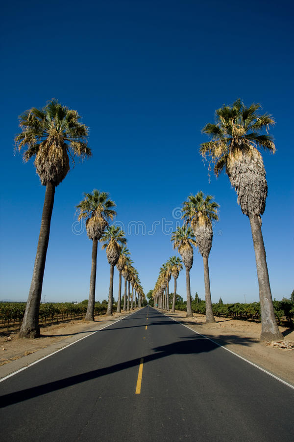 La route a rayé dans des palmiers photo libre de droits