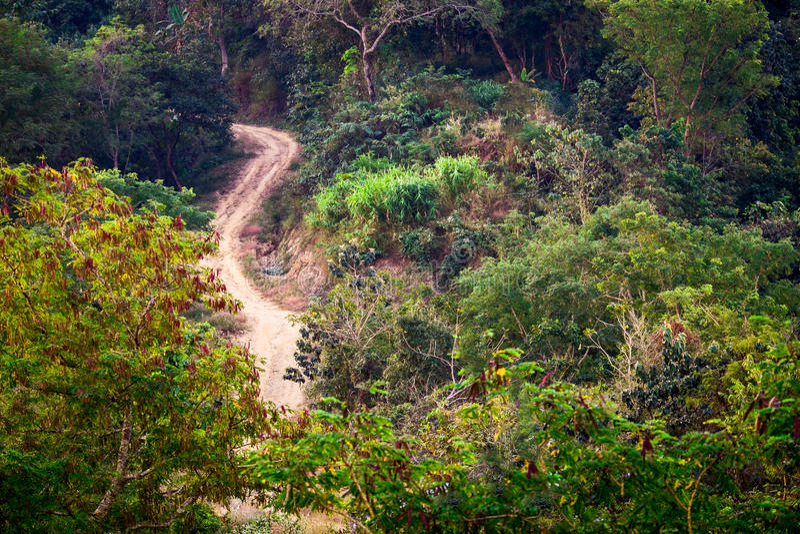 La route rurale à la nature tropicale de forêt colore le fond photo stock