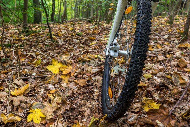 La rueda delantera de una bici de montaña que rueda sobre las hojas amarillas fotos de archivo
