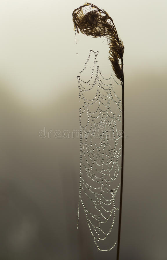 La rugiada ha riguardato la ragnatela nel primo mattino fotografia stock