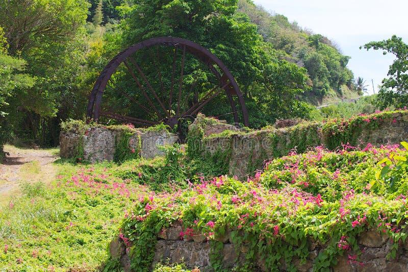 Molino de azúcar viejo con las flores salvajes fotografía de archivo libre de regalías
