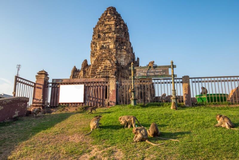 La ruine antique d'architecture, Phra esquintent Sam Yot Temple avec le singe photographie stock libre de droits