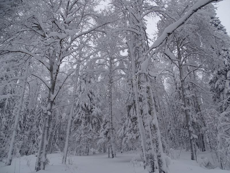 La Russia Viaggio con l'inverno Ural fotografia stock