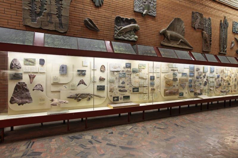 Musée paléontologique image stock